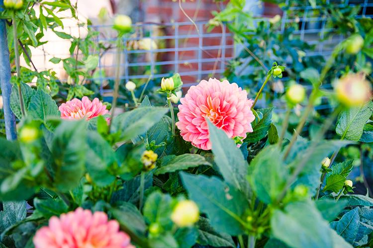 Link zur Bilddatei: Gartengestaltung & Bepflanzung